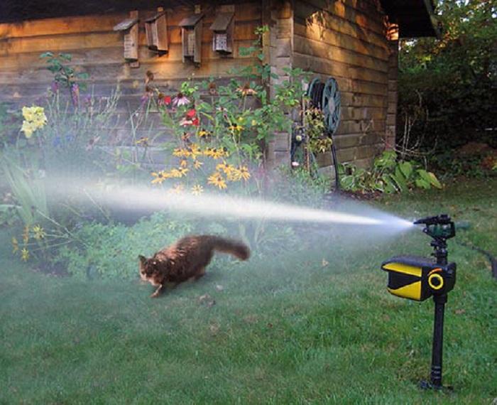 Scarecrow Motion Activated Sprinkler  U0026gt  Hanover Koi Farms