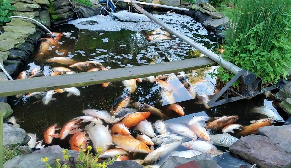 The science of water hanover koi farms for What do you need for a koi pond
