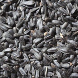 Bird Seed & Seed Mixes