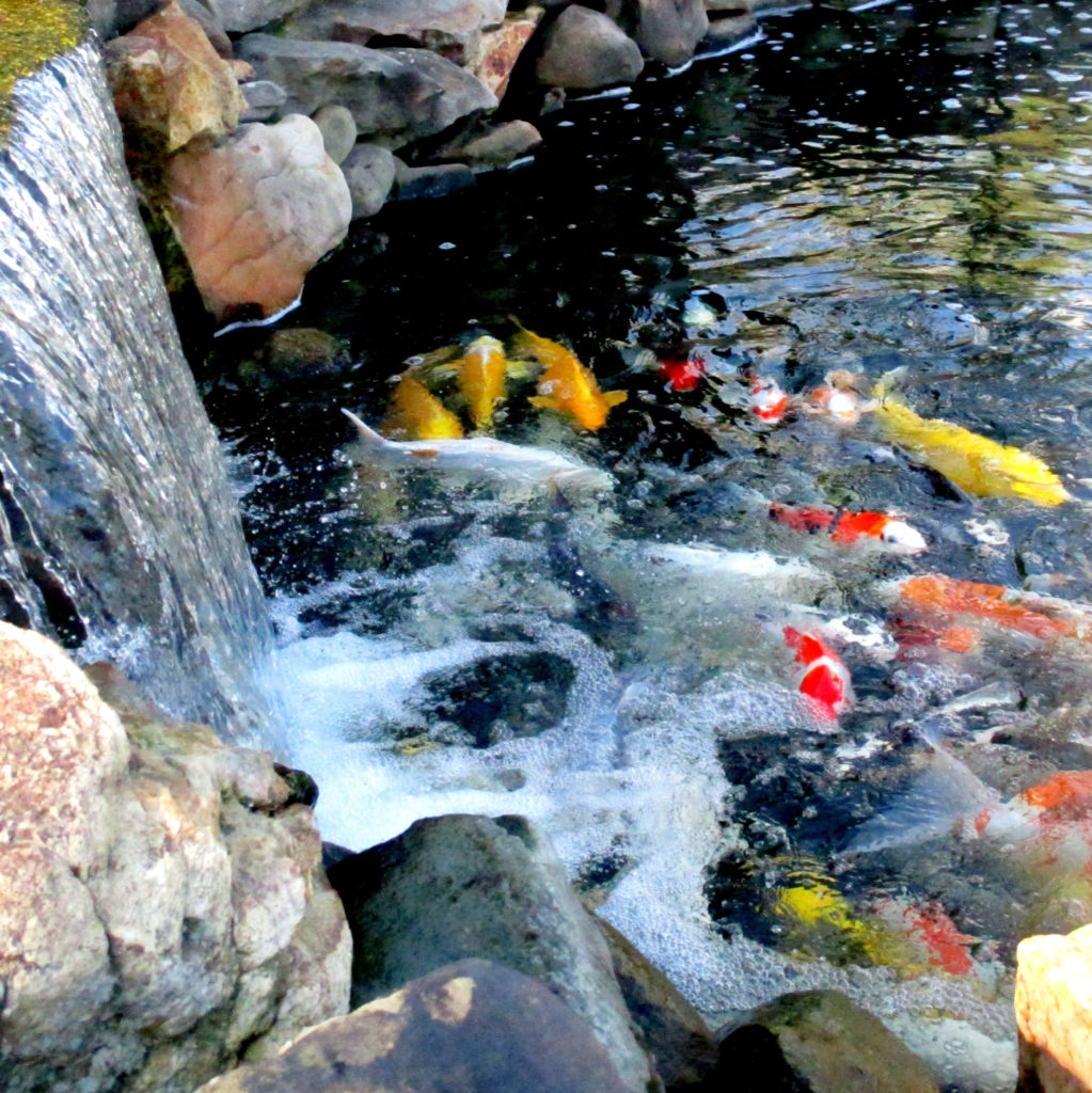 Hanover Koi farms Pond Building Service